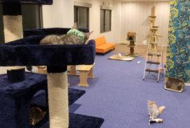 岡山の猫カフェ ルアナ店内